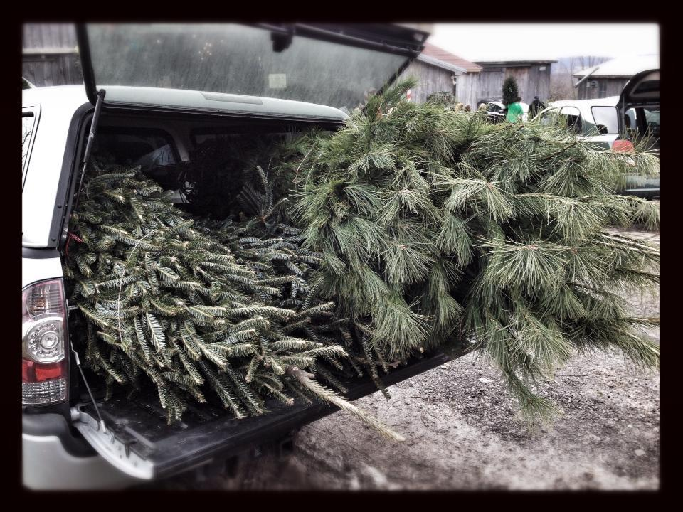 My Favorite Place to Get Christmas Trees in Utica NY ...